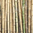 Stock Photo: Dry Bamboo stems