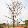 Dry tree with no leaves in the wilderness — Stock Photo