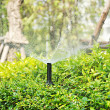Water sprinkler over the bush — Stock Photo