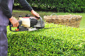 A gardener trimming hedge with trimmer machine — Stock Photo