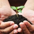 Hands holding green young plant with soil — Stock Photo