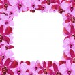 Orchid flower border design — Stock Photo