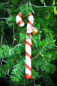 Candy cane kerst ornament — Stockfoto