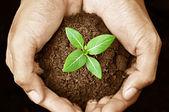 Hand halten jungpflanzen — Stockfoto