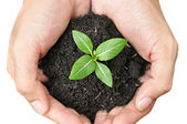 Hand holding young plant — Stock Photo
