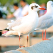 Stock Photo: Beautiful white gulls