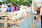Beautiful white gulls — Foto de Stock