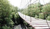 Suspension bridge over mangrove forest — Stock Photo