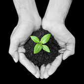 Hand holding green sapling with soil — Stock Photo