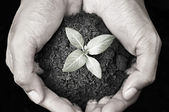 Hand holding sapling with soil — Stock Photo