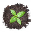 Small green seedling growing from heap of soil — Stock Photo