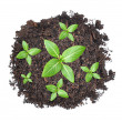 Small green seedlings growing from heap of soil — Stock Photo
