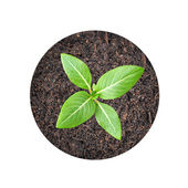 Small green seedling growing from soil — Stock Photo