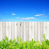 Wooden fence with green fern leaves at the bottom — Stockfoto