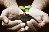 Hands holding green seedling with soil — Stock Photo