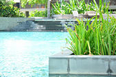 Green plants nearby swimming pool — Stock Photo