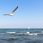 Seagull and a ship at the sea — Stock Photo