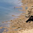 Elephant at the waterhole — Stock Photo