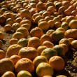 Tangerines that fell off a truck on the farmlands — Stock Photo