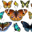 Set of colorful realistic isolated butterflies.Vector illustration — Stock Vector