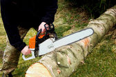 Hazard tree felling — Stock Photo