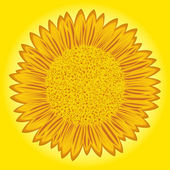 Sunflower on yellow background — Stock Vector
