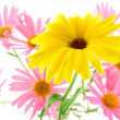 Sunny yellow flower — Stock Photo
