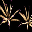 Fireworks reminding flowers — Stock Photo