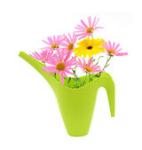 Bouquet of daisies in a watering can — Stock Photo