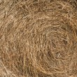Stock Photo: Golden hay background