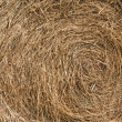 Golden hay background - Stock Photo
