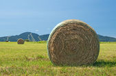 Bales of hay in the green field — Stock Photo