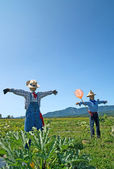 Scarecrows in the field — Stock Photo