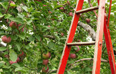 Red ladder in apple orchard — Stock Photo