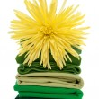 Fresh spring laundry — Stock Photo