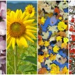 Stock Photo: Four seasons. Spring, summer, autumn, winter.