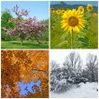 Spring, summer, autumn, winter. Four seasons. - 图库照片