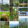 Summer beauty of Canadian forests - Stock Photo