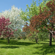 Beautiful spring trees in bloom — Stock Photo