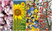 Fyra säsonger. vår, sommar, höst, vinter. — Stockfoto