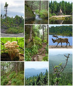Summer beauty of Canadian forests — Stock Photo