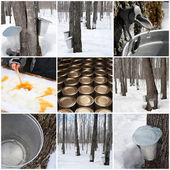 Maple syrup production — ストック写真
