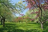 Kvetoucí stromy na zeleném trávníku — Stock fotografie