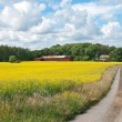 Country road in yellow meadow — Stock Photo