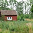 Stock Photo: Traditional Swedish red house in summer landscape