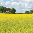 Scandinavian summer landscape with yellow meadow - Stock Photo