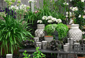Beautiful plants and ceramics in a flower shop — Stock Photo