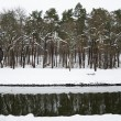 Winter landscape, trees growing by a calm river — Stock Photo