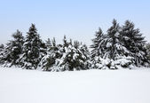 Winter landscape after the snowstorm — Stock Photo