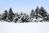 Zimowy krajobraz po kurzawa — Zdjęcie stockowe